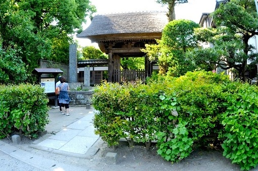 鎌倉紫陽花(あじさい)スポット2014:極楽寺・成就院・御霊神社・長谷寺