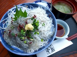 海が見える江ノ島の食事処江之島亭の生しらす・かき揚げしらす丼