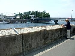 湘南江ノ島片瀬海岸の生しらす&シラス専門店浜野水産湘南丸のしらす干し