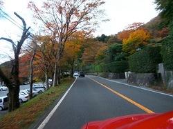 箱根紅葉ドライブ箱根湯本〜仙石原