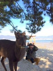 湘南から宮島厳島神社・出雲大社・鳥取砂丘ドライブ厳島神社と鹿