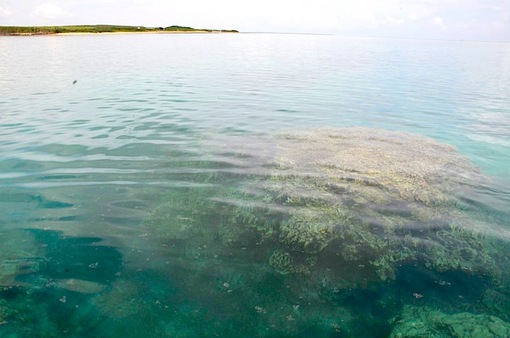 湘南から沖縄八重山旅行小浜島はいむるぶしから嘉弥真島シュノーケリング