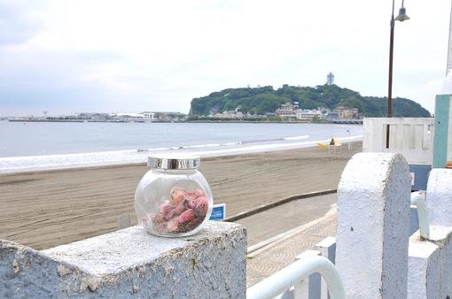 湘南江ノ島片瀬海岸西浜でさくら貝(桜貝)拾い