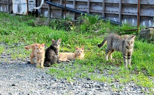 新潟県佐渡島の野生のニャンコ(ネコ/猫)
