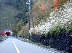 丹沢大山国定公園ヤビツ峠の紅葉ドライブ散策