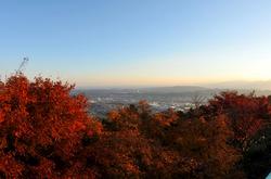 丹沢大山国定公園ヤビツ峠の紅葉ドライブ散策菜の花台展望台