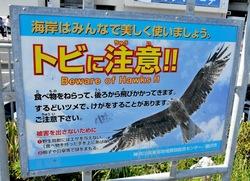 湘南江ノ島片瀬海岸で観光客の食べ物を狙うトンビ