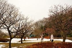 藤沢新林公園の梅林