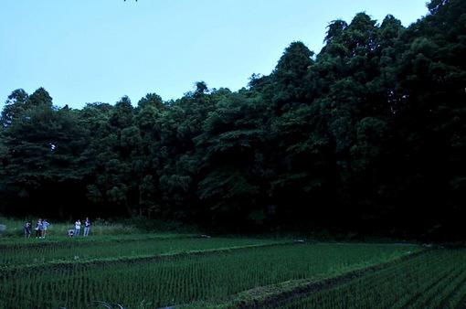 石川丸山八戸ほたるの里@藤沢で蛍(ホタル)観賞