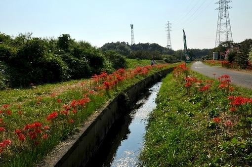 小出川@遠藤:彼岸花(ひがんばな)まつりで秋の散歩2014