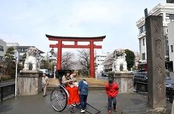 鎌倉段葛の桜が満開