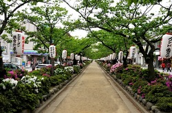 鎌倉段葛のツツジと葉桜のトンネル