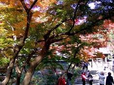 鎌倉紅葉スポット北鎌倉の円覚寺
