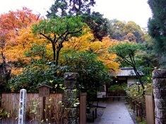 鎌倉紅葉スポット北鎌倉の明月院
