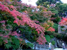鎌倉紅葉スポット長谷の長谷寺