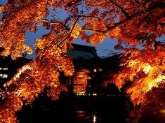 鎌倉紅葉スポット長谷の長谷寺ライトアップ