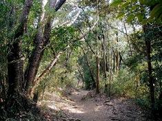 鎌倉紅葉スポット浄智寺から大仏ハイキングコース