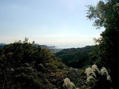 鎌倉紅葉スポット源氏山から大仏ハイキングコース