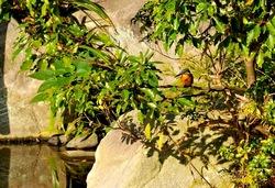 北鎌倉の紅葉散策円覚寺の妙香池のカワセミ