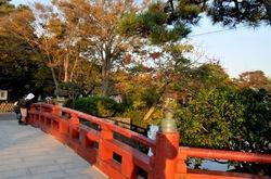 鎌倉の紅葉散策鶴岡八幡宮の源氏池