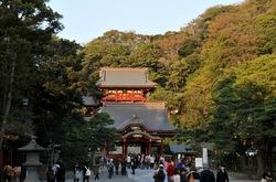 鎌倉の紅葉散策鶴岡八幡宮の境内