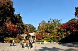 鎌倉紅葉散策の鎌倉宮