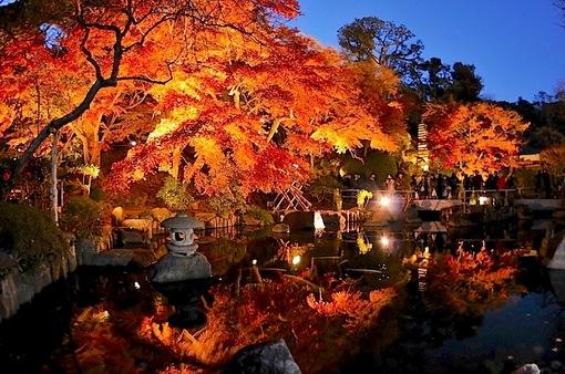 鎌倉紅葉スポット2014:人気の北鎌倉・長谷周辺コース長谷寺ライトアップ