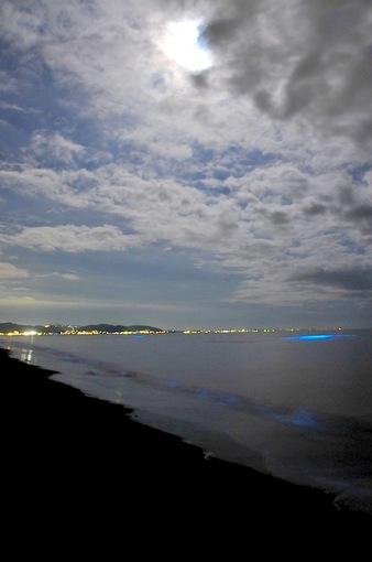 2015年のGWは湘南・鎌倉で夜光虫フィーバー@七里ガ浜