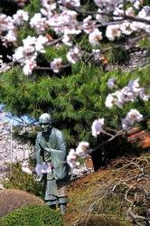 藤沢桜花チェック2014遊行寺(清浄光寺)の一遍上人像