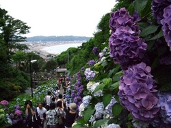 鎌倉の成就院の海と紫陽花