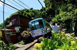 鎌倉の御霊神社の紫陽花と江ノ電
