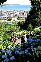 鎌倉長谷寺の眺望散策路から海を眺める新緑と紫陽花