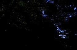 鎌倉鶴岡八幡宮のほたるまつり