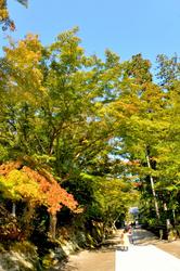 北鎌倉の紅葉散策円覚寺の境内