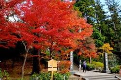 北鎌倉円覚寺山門前の紅葉