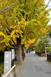 北鎌倉明月院の参道の紅葉