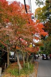 北鎌倉明月院参道の紅葉