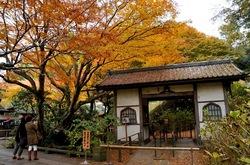 北鎌倉明月院山門前の紅葉