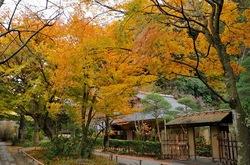北鎌倉明月院月笑軒の紅葉