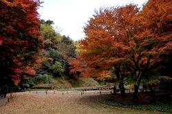 北鎌倉明月院の本堂裏庭の紅葉