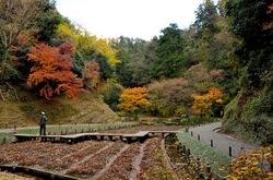 北鎌倉明月院の本堂裏庭菖蒲畑の紅葉
