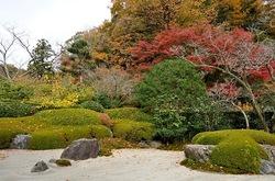 北鎌倉明月院の枯山水庭園の紅葉