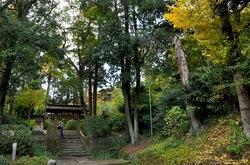 北鎌倉浄智寺の山門前の紅葉