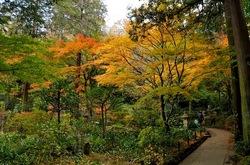 北鎌倉東慶寺境内奥の紅葉