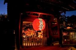 鎌倉長谷寺の紅葉ライトアップ山門前