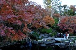 鎌倉長谷寺の放生池前の紅葉