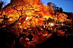 鎌倉長谷寺の紅葉ライトアップ放生池前