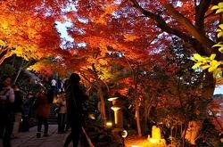 鎌倉長谷寺の紅葉ライトアップ良縁地蔵