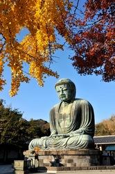 鎌倉高徳院大仏の紅葉