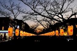 鎌倉若宮大路(段葛)のぼんぼり